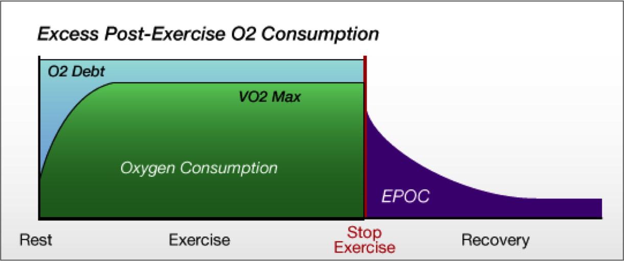 science exercise and maximal oxygen consumption Backgroundthe increase in maximal oxygen consumption (vo2max) with endurance training is associated with that of maximal cardiac output (qmax), but not oxygen extraction, in young individuals.
